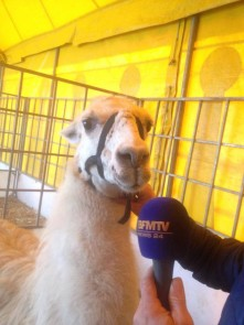 Serge-le-lama-interview-BFMTV