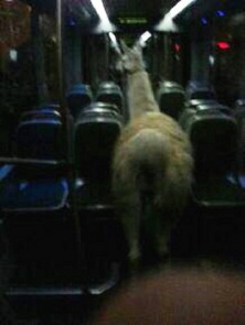 serge-le-lama-en-photo-dans-le-tram